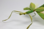 Crepe_Paper_Insects_PaperArt_Goliath_Stick_Insect_by_faltmanufaktur04