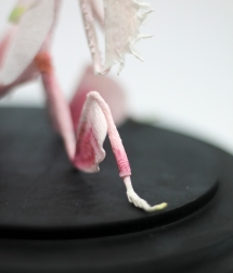 Crepe_Paper_Insects_PaperArt_Praying_orchid_mantis_by_faltmanufaktur15