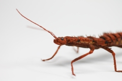 Crepe_Paper_Insects_PaperArt_thorny_devil_StickInsect_by_faltmanufaktur19