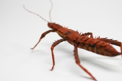 Crepe_Paper_Insects_PaperArt_thorny_devil_StickInsect_by_faltmanufaktur21