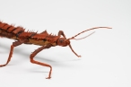 Crepe_Paper_Insects_PaperArt_thorny_devil_StickInsect_by_faltmanufaktur22