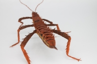 Crepe_Paper_Insects_PaperArt_thorny_devil_StickInsect_by_faltmanufaktur24