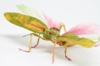 Crepe_Paper_Insects_PaperArt_Tropidacris_Locust_by_faltmanufaktur01 Feature