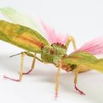 Crepe_Paper_Insects_PaperArt_Tropidacris_Locust_by_faltmanufaktur01 Feature