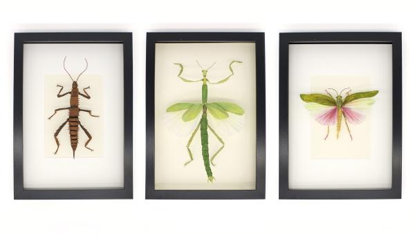 insekten.jpg